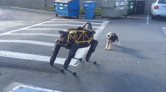 Watch this terrier get irate about a robot dog